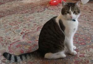 1280px-Larry_the_cat_No10